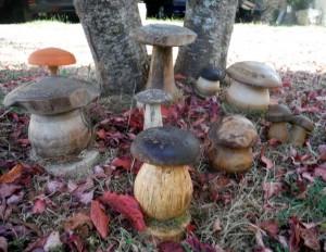 Champignons en bois de la région